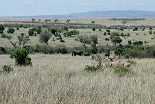 Free Elephant In Kenya Stock Photography - 168662