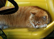 Free Asleep At The Wheel Royalty Free Stock Images - 169149