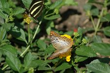 Free Pair Of Butterflies Stock Photos - 169963