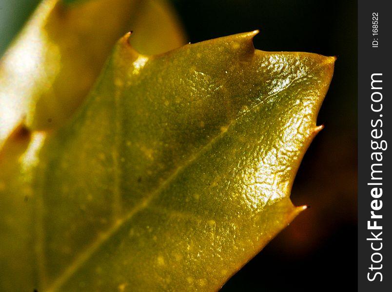 Shiny Spikey Leaf