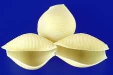 Free Pasta Shell Design Stock Photos - 1600623