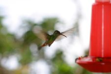 Free Hummingbird At Bird Feeder Royalty Free Stock Photography - 1601607