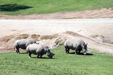 Free White Rhinoceros Royalty Free Stock Image - 1602796