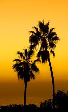 Free Palms Stock Image - 1603101