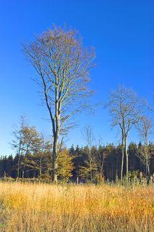 Autumn Peace Stock Photo