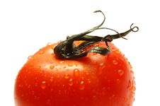 Free Fresh Ripe Tomato Royalty Free Stock Photography - 1605567