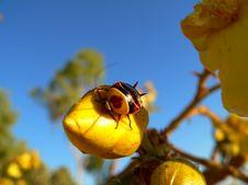 Free Bug Royalty Free Stock Photo - 1606985