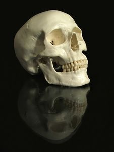 Free Cranium Stock Images - 1607424