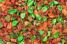 Free Petals Stock Photos - 1607553