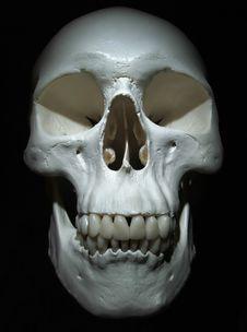 Free Cranium Stock Image - 1607661