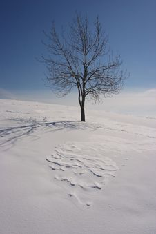 Free Lonely Tree In Winter Royalty Free Stock Images - 1609779