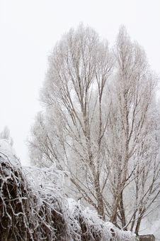 Free Winter Trees Royalty Free Stock Photo - 1609945
