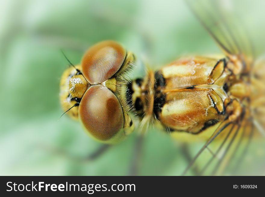Dragonfly Surveillance