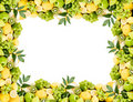 Free Fruit Frame Royalty Free Stock Images - 16005089