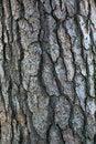 Free Tree Bark Pattern Royalty Free Stock Photos - 16008698