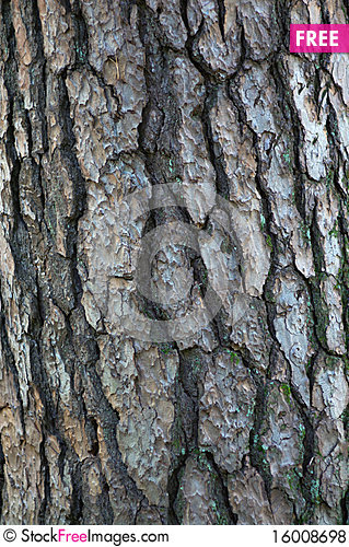 Free Tree Bark Pattern Royalty Free Stock Photos - 16008698