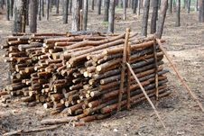 Free Heap From Firewood Stock Image - 16000211