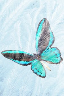 Free Butterfly For Freezing Glass Royalty Free Stock Photo - 16000305