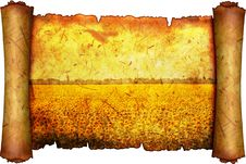 Free Field Of The Flowering Sunflower Stock Photo - 16000510