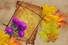 Free Asters And Maple Leafs With Frame Royalty Free Stock Images - 16000529