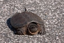 Free Big Turtle Stock Photos - 16000883