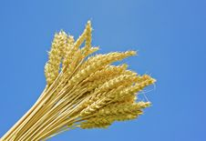 Free Wheat Spikes And Blue Sky Background Stock Photo - 16001560
