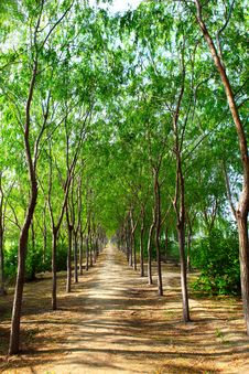 Forest Walking Path Royalty Free Stock Photography