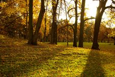 Free Autumn In The Park Stock Photo - 16002390