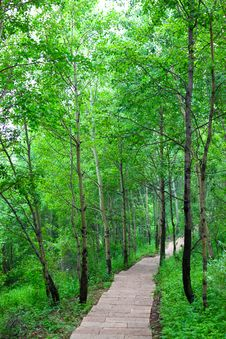 Forest Walking Path Royalty Free Stock Photo