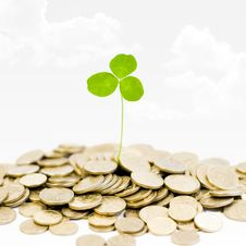 Free Plant And A Lot Of Golden Coins Over Blue Sky And Royalty Free Stock Photo - 16004155