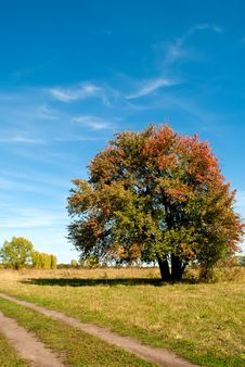 Free Big Tree On Green Field With Blue Sky Stock Photo - 16004840
