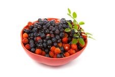 Free Wild Strawberries And Blueberries Royalty Free Stock Photography - 16005247