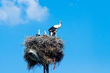 Free Stork Family In Straw Nest Stock Image - 16006311