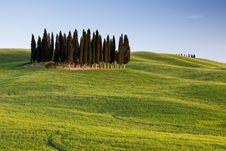 Free Tuscan Idyllic Countryside Royalty Free Stock Photo - 16006585