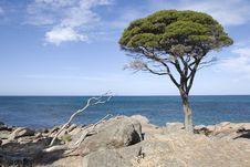 Free Lone Tree On The Peninsula Royalty Free Stock Photos - 16006638