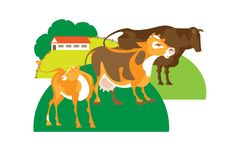 Free Bull, Cow And Calf Royalty Free Stock Photography - 16006757