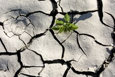 Free Green Plant Growing From Cracked Earth Stock Photo - 16008530
