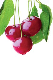 Free Cherry Stock Photo - 16008630