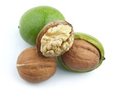 Free Young Walnuts Stock Photos - 16009963