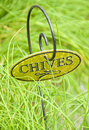 Free Fresh Chive Herb Stock Photo - 16010780