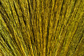Free Broom Royalty Free Stock Photos - 16011188