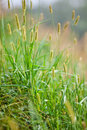Free Green Grass In A Sunny Day Stock Photos - 16014733