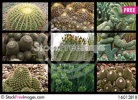 Free Cactus Collage Royalty Free Stock Photos - 16012818