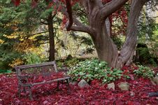 Free Autumn Maple With Bench Royalty Free Stock Image - 16010606