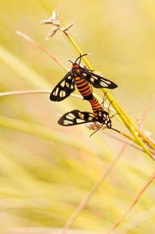 Free Insect Mating Stock Images - 16010744