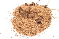 Free Buckwheat Grain Stock Image - 16011041