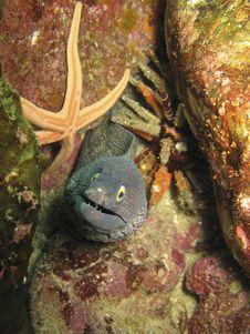 Free Moray Eel , Starfish, And Sea Urchin Stock Photography - 16011262