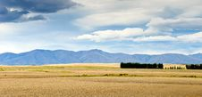 Pasturelands In The Heat Of Summer Stock Image