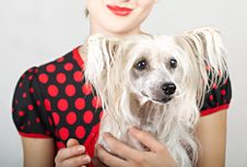 Beautiful Girl With A Dog In Her Arms Stock Photography