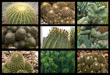 Free Cactus Collage Royalty Free Stock Photos - 16012818